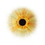 eye05