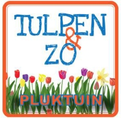Tulpen & Zo