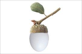Eggcorn.jpg