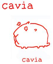 Cavia.png