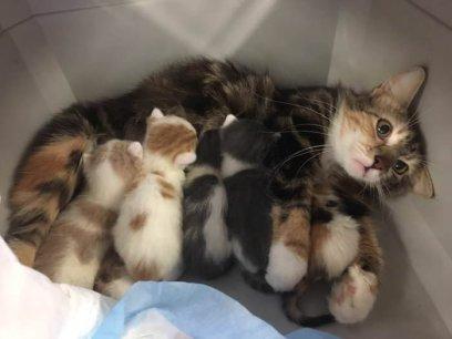 Moederschap