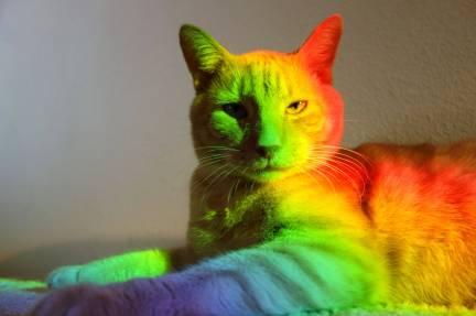 Rainbowcat