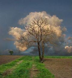 Wolkboom